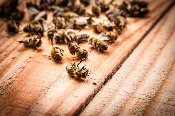 pesticidi danni apicultura