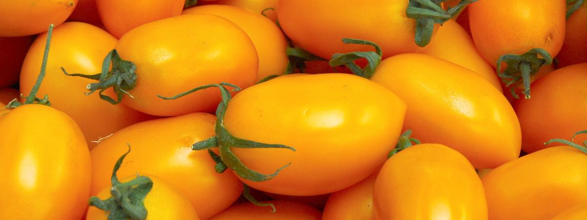 pomodorino giallo di rofrano