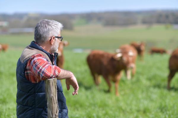allevatori bovini all'aperto