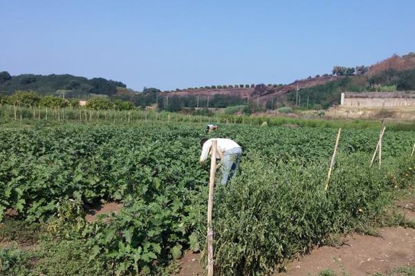 campi coltivati sos rosarno