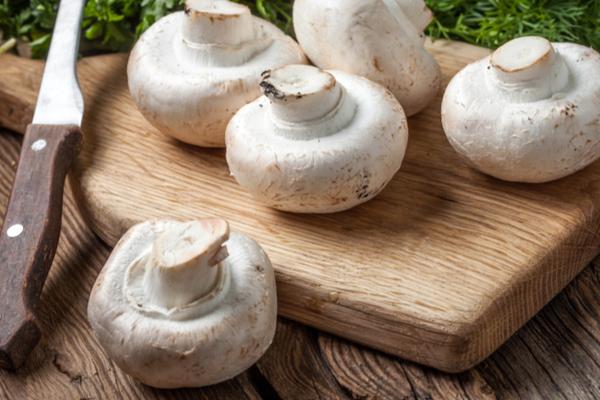 champignon funghi