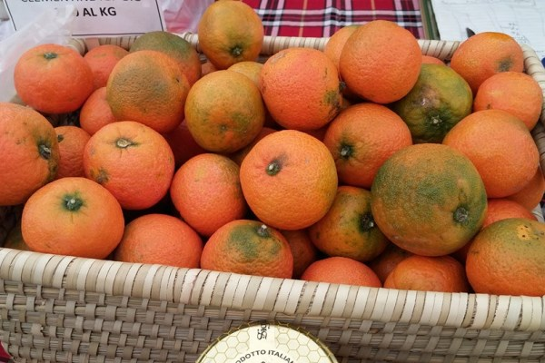 clementine-sos-rosarno