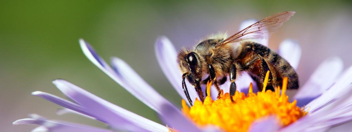 la rivoluzione delle api