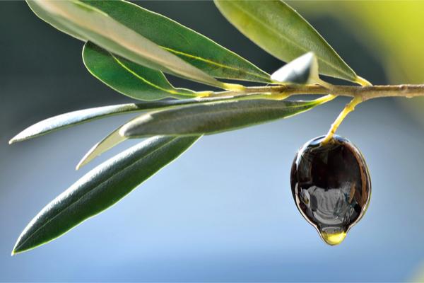 mercato olio d'oliva
