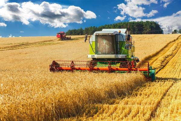 mietitura grano