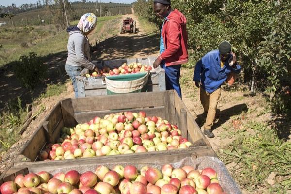 sfruttamento lavoratori frutteti