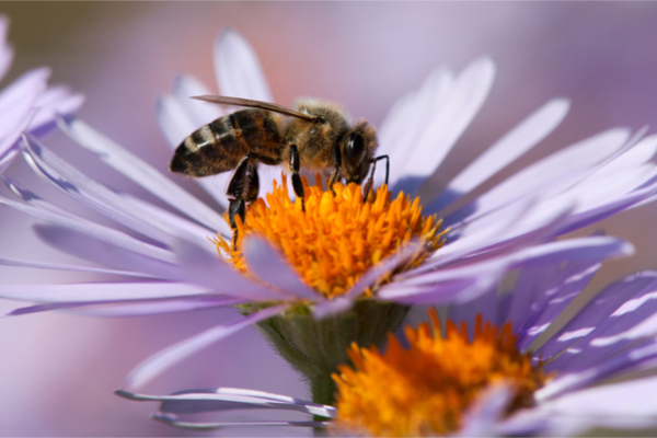 apicoltura biologica