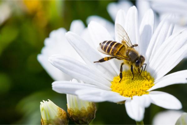 apicoltura nomade