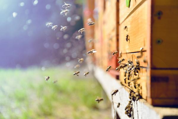 importanza delle api