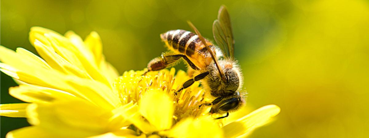intervista la rivoluzione delle api