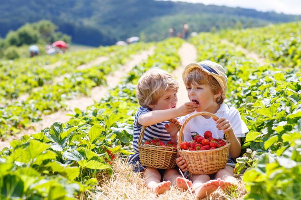 consumare cibo biologico