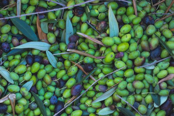 olio oliva contraffazione