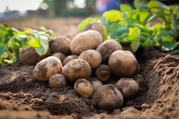 patate carboidrati complessi