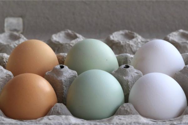 colore guscio uova