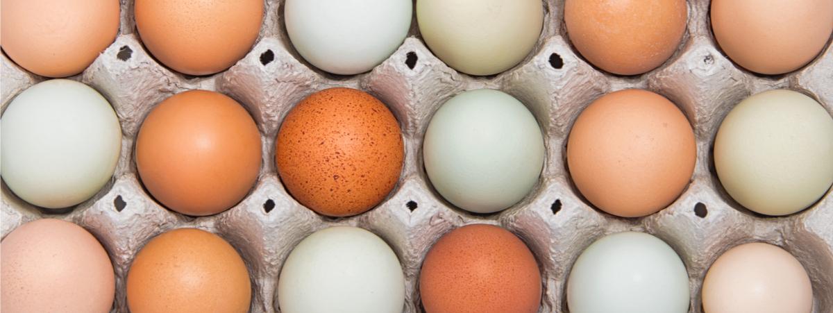 colore tuorlo delle uova