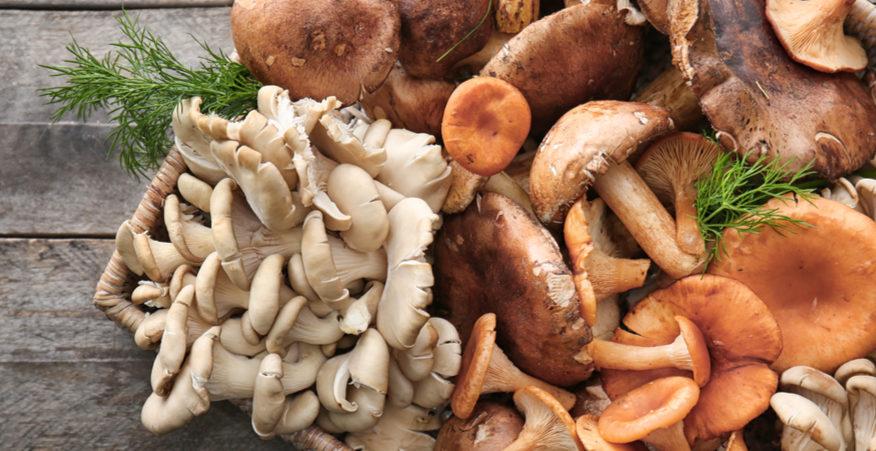 varietà di funghi