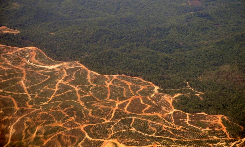 deforestazione e desertificazione