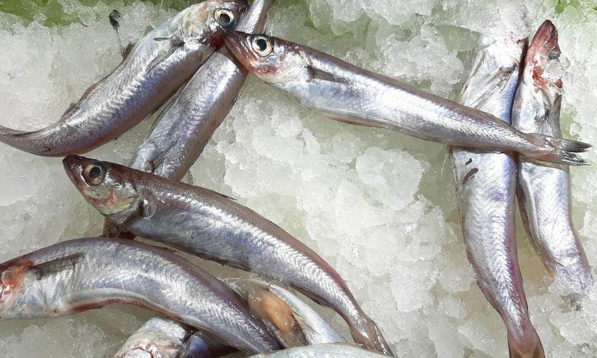potassolo pesce dicembre