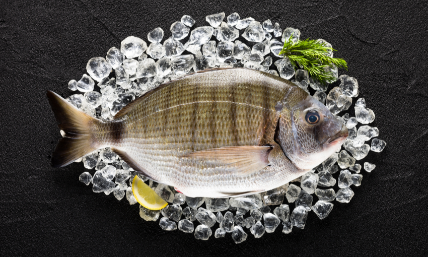sargo pesce dicembre
