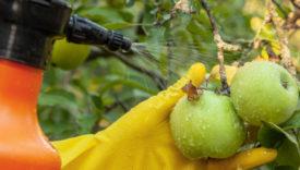 pesticidi nelle mele