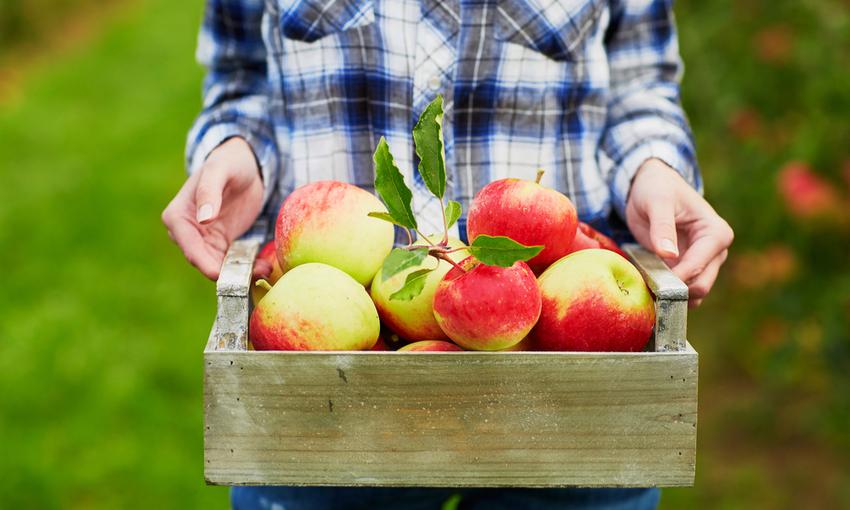 produzione biologica mele