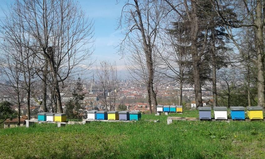 apicoltura urbana torino