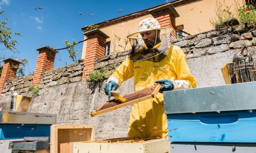bee my job apicoltura