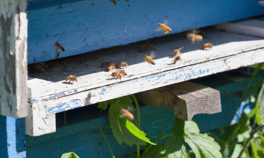 biomonitoraggio api