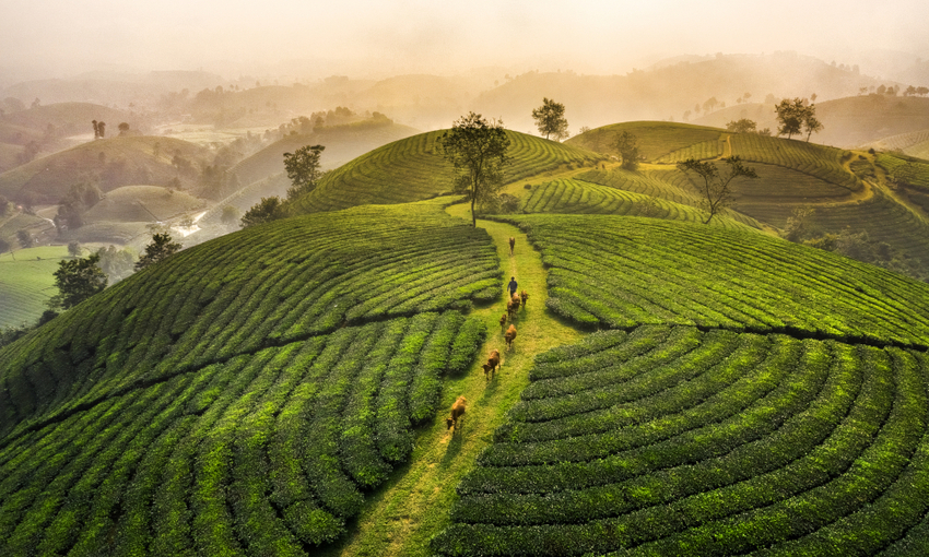 diffusione tè