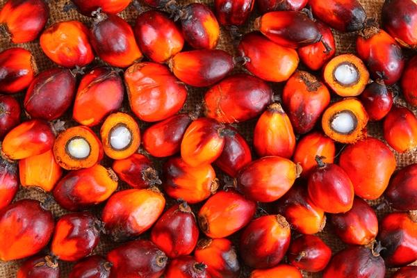 frutti olio di palma