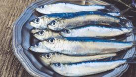 pesce azzurro caratteristiche