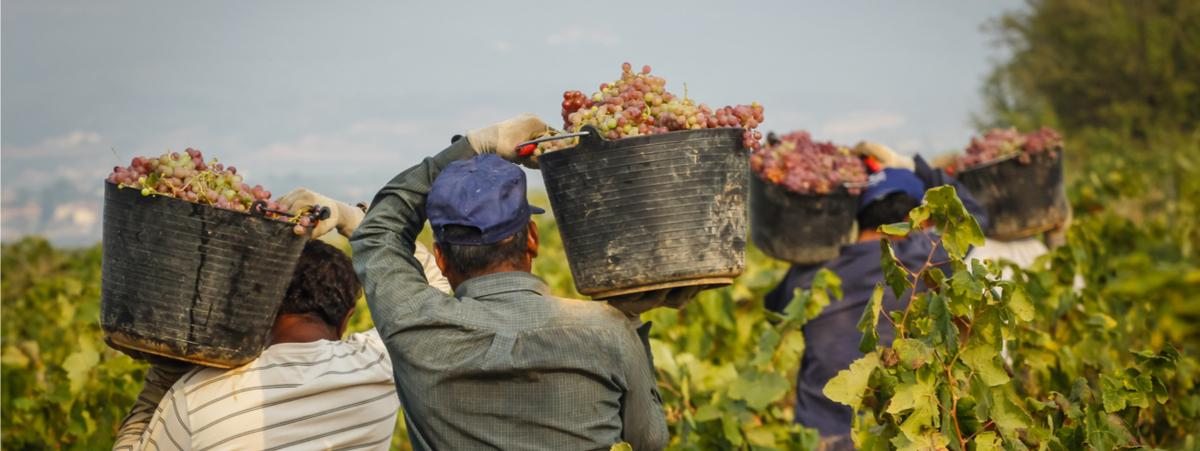 Cresce il volume d'affari delle agromafie: i numeri del rapporto 2018