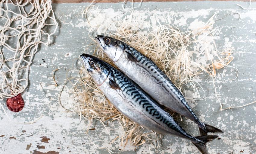 Pesce Azzurro Le Caratteristiche I Valori Nutrizionali La Pesca