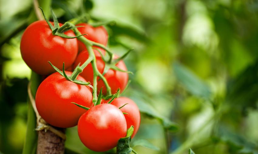agricoltura 4.0 vantaggi