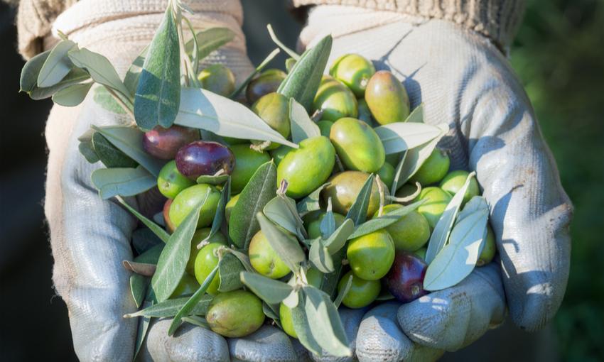 olive olio d'oliva