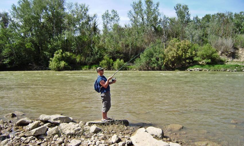 pesca pesce siluro