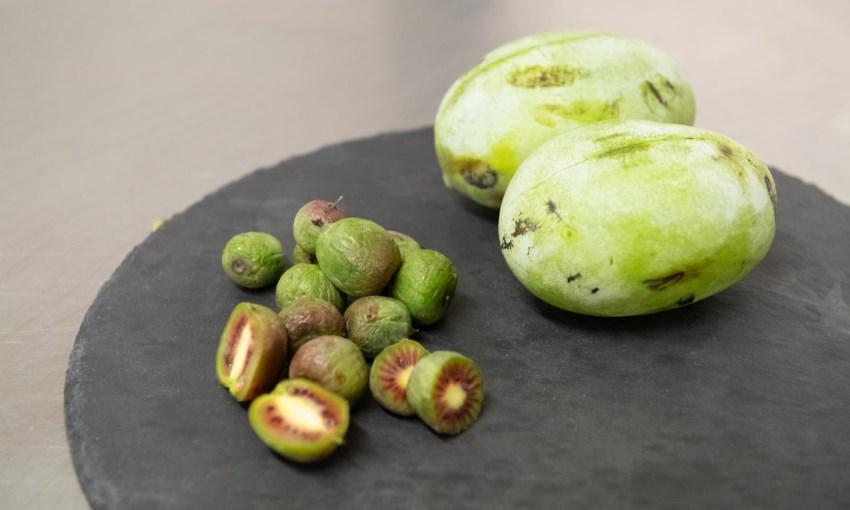 asimina kiwi arguta rosso