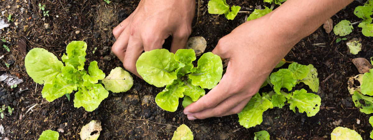 biologico cibo del futuro