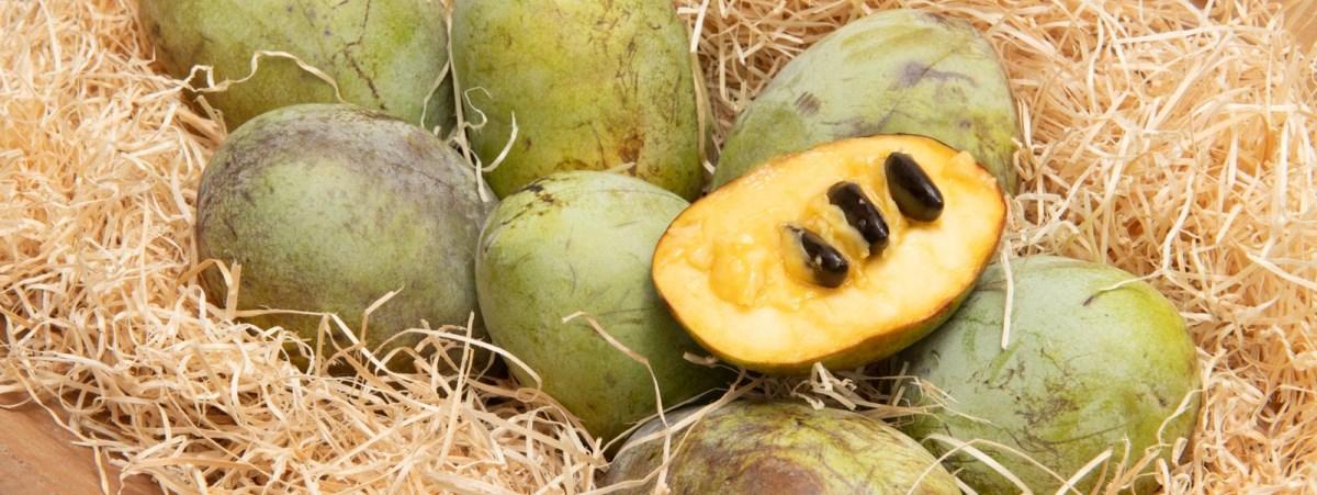 Kiwi rosso, Asimina, Feijoa: ecco i frutti esotici prodotti in Italia