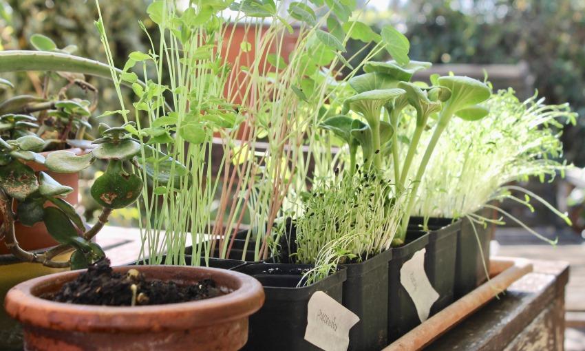 orto urbano semina