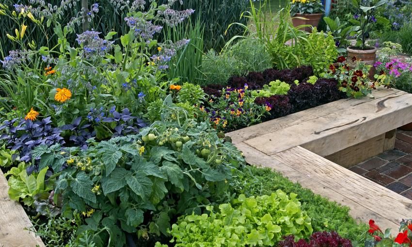 piante orto
