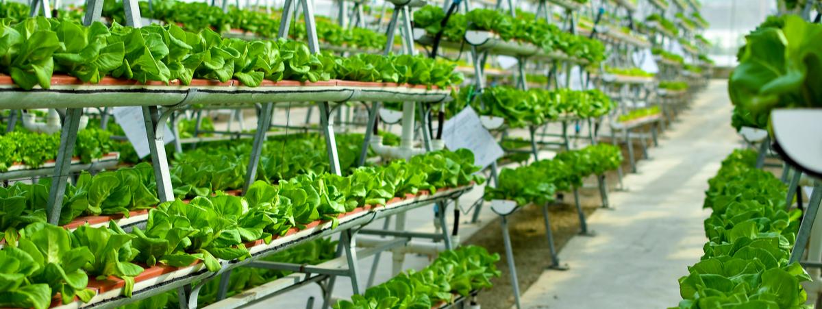 agricoltura verticale
