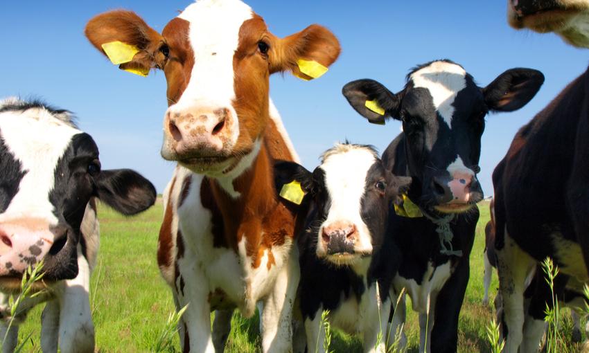 Benessere Animale Quali Sono Le Normative Europee E Italiane