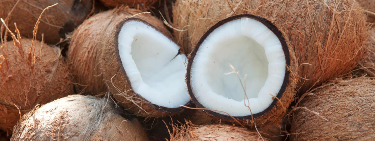 noci di cocco proprietà