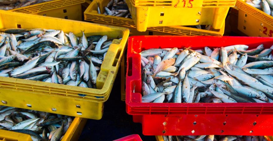 pesca e cambiamenti climatici
