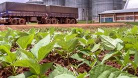 produzione soia