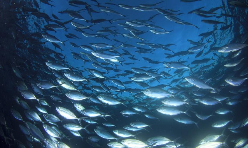 stock ittici