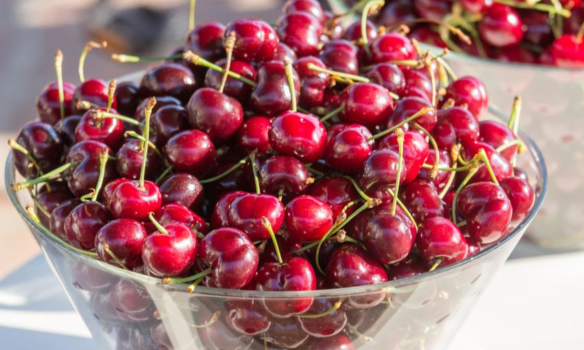 zona produzione ciliegia vignola