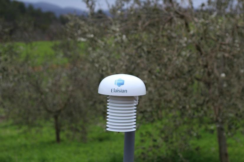 elaisian monitoraggio oliveto