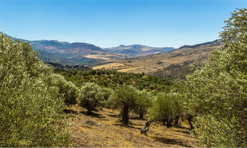 oliveto olio italiano